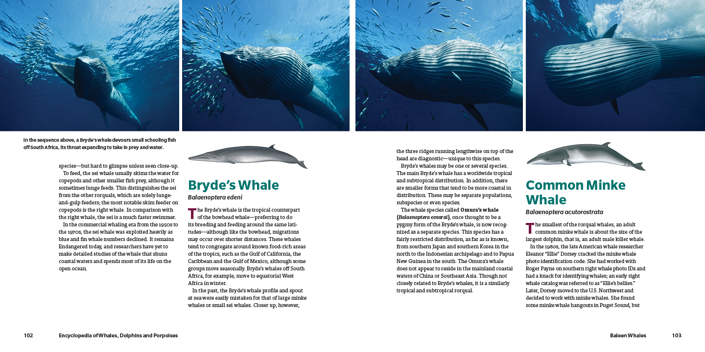 Whales_pp102-103